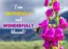 I am gratefully and wonderfully blessed!